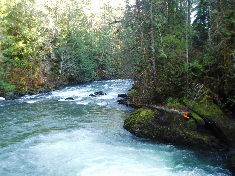 WDFW and Corp work to restore vital salmon habitat on the Duckabash River